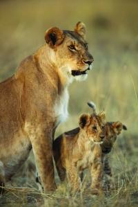 SA wildlife